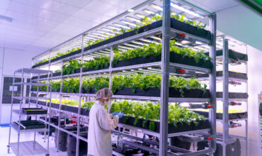 As Fresh As Come: Vegetory, Leading Indoor Vertical Farmers, Produces Nutrition-Packed Vegetables through Environmentally Sustainable Methods