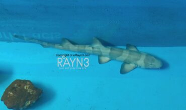 S Hotels & Resorts' Marine Discovery Centres  Help to Save Sharks in Thailand